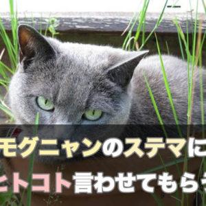 猫が大切な飼い主の1人として、モグニャンのステマにひとこと言わせてもらう