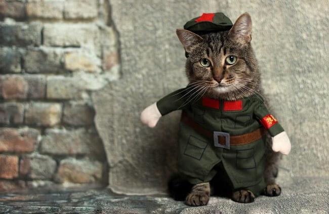 モグニャンを成猫期の猫へ与えることで期待できる効果とは?