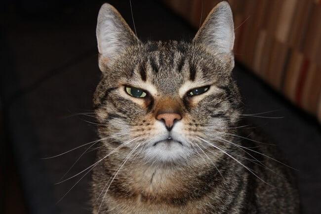モグニャンが「合わない猫」もいる?こんな猫には注意しよう