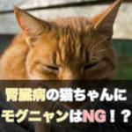 【要注意】モグニャンは腎臓病のシニア猫にはNG!それでも予防に最適と言われる4つの理由