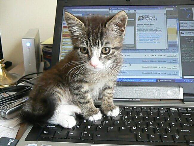 モグニャンを子猫に与える際の注意点はある?