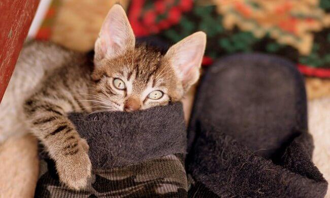 特にこんな猫には効果的!モグニャンが「合う猫」