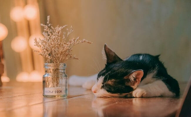 モグニャンはどんな猫に合う?成分表から見えてくる「こんな猫に最適」「こんな猫は注意」