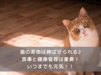 猫の寿命を伸ばすコツ