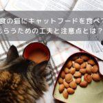 少食猫の食べさせ方
