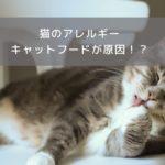 猫のアレルギーの原因