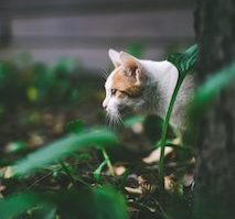 外飼いの猫
